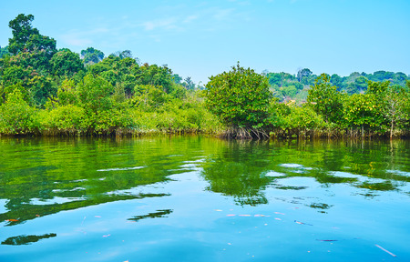 Enjoy the beauty of large mangrove forests, stretching along the coastal brackish waters of Kangy river, Chaung Tha zone, Myanmar. 스톡 콘텐츠