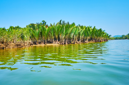 Green thicket of nipa palms on Kangy river, famous for its scenic mangroves, growing at the Bay of Bengal, Myanmar. Stock fotó