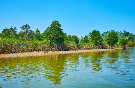 Kangy river is lined by lush mangroves, growing on marine alluvium soils, that can be seen on low tide, Chaung Tha zone, Myanmar. Stock fotó