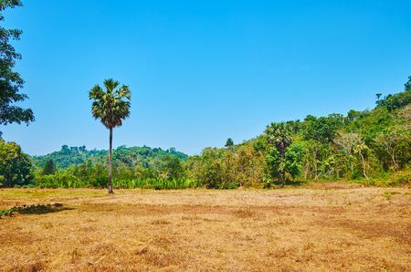 Agricultural lands among the lush tropic forests and green hills on the background, Chaung Tha, Myanmar. 스톡 콘텐츠
