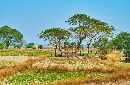 The rural scene with old nipa hut, lush acacia trees and dry meadows in Yangon suburb, Myanmar. Stock Photo