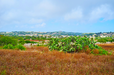 The vastness of Buskett Gardens with woodland, sclerophyllous garrigue and maquis shrubland, growing in Wied Il-Luq valley with Verdala Palace on the horizon, Siggiewi, Malta.