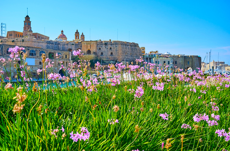 The view on the medieval fortifications of Senglea through the scenic flower bed in Birgu, Malta