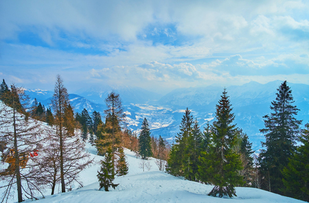 Enjoy the beauty of winter pine forest, walking along the slopes of Mount Katrin, Bad Ischl, Salzkammergut, Austria