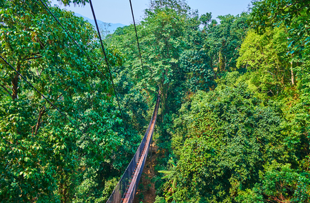 Aerial view of the deep tropical rainforest and long suspension bridges, stretching along the spreading trees, Tree Top Walk, Mae Fah Luang garden, Doi Tung, Thailand Editorial