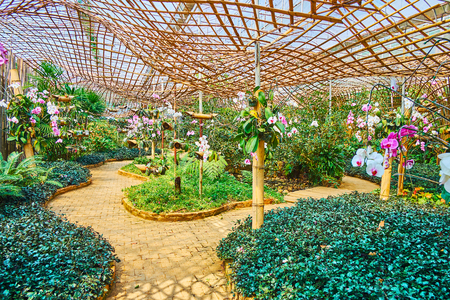 Enjoy the beautiful orchid department of Mae Fah Luang garden, covered with scenic bamboo canopy, Doi Tung, Thailand