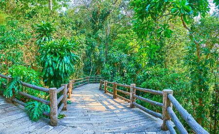 The curved alley leads to the shady lush rainforest section of Mae Fah Luang garden, Doi Tung, Thailand