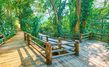 Walk through the shady alley among the lush rainforest trees of Mae Fah Luang garden, Doi Tung, Thailand Banco de Imagens