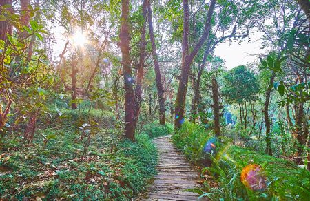 Watch the bright evening sun though the lush trees of Mae Fah Luang Arboretum, Doi Chang Moob, Thailand