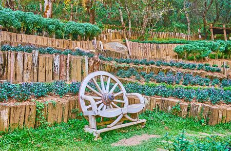 The small decorative wooden bench of wagon wheel on the Doi Chang Moob mountain slope, covered with terrace flower beds of Mae Fah Luang Arboretum, Thailand , Thailand terrace
