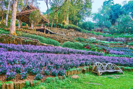 The vintage bench among the flower beds of purple pentsemon in Mae Fah Luang Arboretum, Doi Chang Moob, Thailand