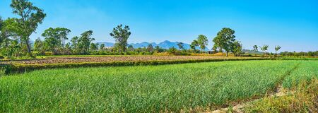 Panoramic landscape of Pa-Oh agricultural grounds with garlic field and gardens, located in Taunggyi, Myanmar