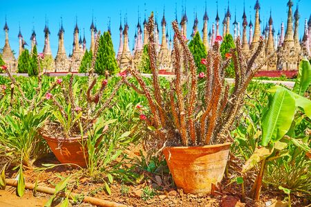 The scenic flower bed with green plants, flowers, cactuses in pots in front of Kakku Pagodas site, Myanmar