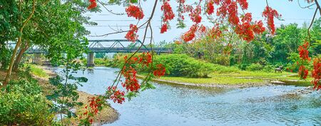 Panorama of the Pai river, lush greenery around it, branches of blooming flame tree and Tha Pai Memorial bridge on the background, Pai suburb, Thailand Stockfoto - 130155108