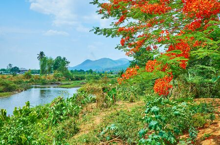 Walk along the Pai river and watch fast flowing waters, lush green forest and bright orange flowers of flame tree branch, swaying in the wind, Thailand