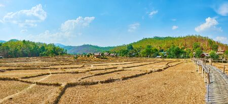 Panorama of dried terrace paddy field and curved Boon Ko Ku So bamboo bridge, Pai suburb, Thailand
