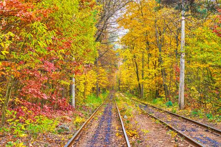 Visit beautiful autumn forest of Pushcha-Voditsa spa resort, the tram routes lead among the lush trees with bright yellow and red leaves, Kiev, Ukraine.