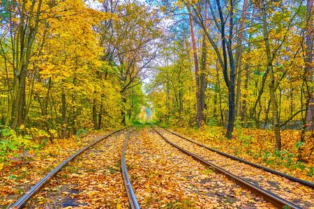 The route of Kiev public tram network stretches along the deep woodland of old neighborhood and popular climate and spa resort of Pushcha-Voditsa, this place is especially beautiful in autumn, Ukraine
