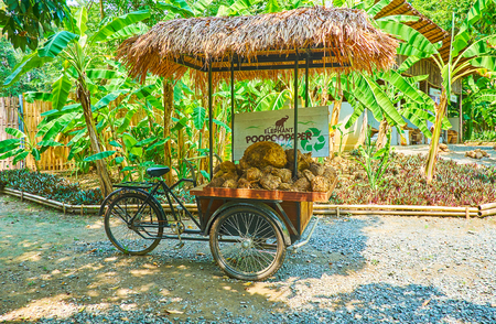 CHIANG MAI, THAILAND - MAY 5, 2019: The vintage cargo bicycle with elephant poop in cart and palm leaf canopy stands in alley of Poopoopaper park, on May 5 in Chiang Mai