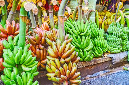 The green and red bunches of bananas at the stall of Chinatown market, Yangon, Myanmar