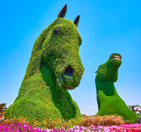 DUBAI, UAE - MARCH 5, 2020: The giant floral horse installtions amid petunia flower beds in Miracle Garden, on March 5 in Dubai