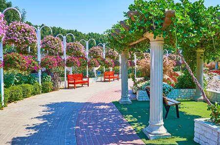 DUBAI, UAE - MARCH 5, 2020: Walk the alley of Miracle Garden, richly decorated with colorful petunias, hanging from the poles, on March 5 in Dubai