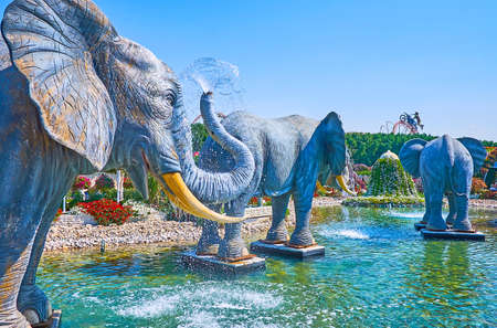DUBAI, UAE - MARCH 5, 2020: The huge statues of elephants, pouring water from the trunks in pond of Miracle Garden, on March 5 in Dubai