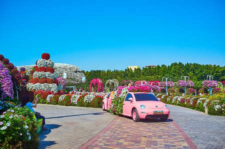 DUBAI, UAE - MARCH 5, 2020: The pink car with scenic petunias flower beds inside of it, Miracle Garden, on March 5 in Dubai