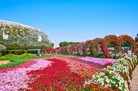 DUBAI, UAE - MARCH 5, 2020: Amazing flower beds of colored petunias and heart-shaped arches decorate the Miracle Garden, on March 5 in Dubai