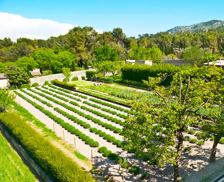 The garden of Saint-Paul de Mausole Monastery, also named Van Gogh field, cause painter was a self-admitted patient at the Saint-Paul asylum, Saint-Remy-de-Provence, France