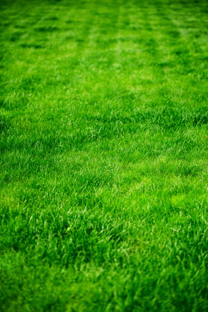 green meadow: Background of fresh green grass in sunshine Stock Photo