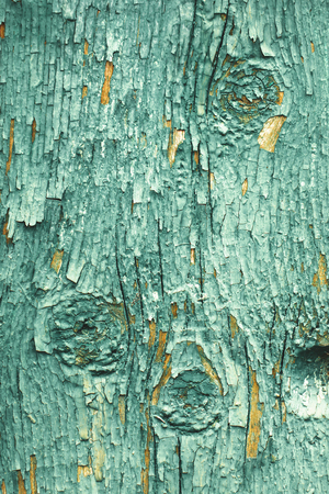 crannied: Texture of cracked rough wood surface painted