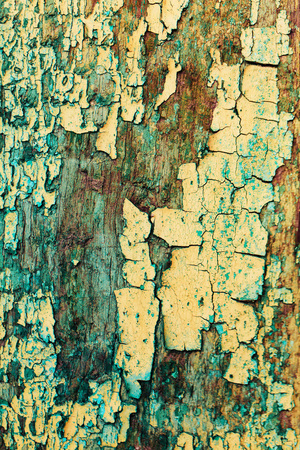 painted wood: Texture of cracked rough wood surface painted