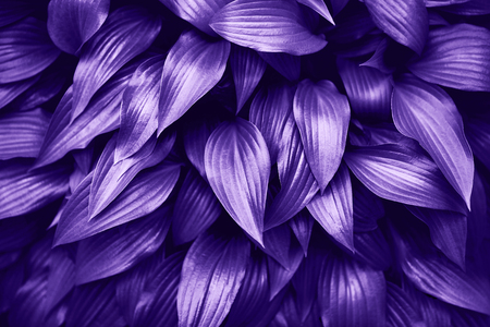 Ultra Violet background made of fresh green leaves. Stock Photo