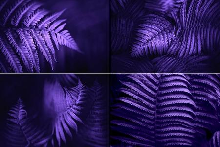 Set of beautiful fern leaves, macro