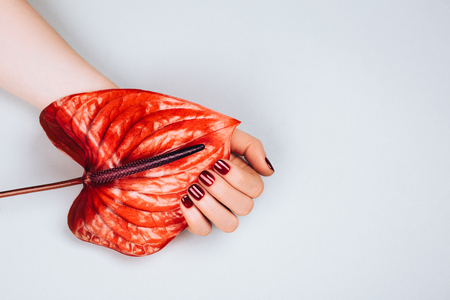 Red manicure with flower - Anthurium bordo. Concept of stylish manicure. Flat lay style. Archivio Fotografico - 96567040