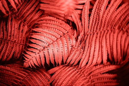 Beautiful fern leaves foliage. Natural floral fern background. Living Coral creative and moody color of the picture. Stock fotó