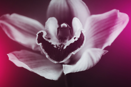 Black and white orchid detailed stylish flower. Macro. Imagens