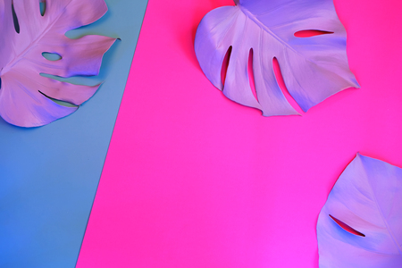 Tropical purple monstera leaves in neon light on dual trendy background. Flat lay style. Imagens