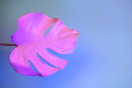 Tropical monstera leaf in neon light on blue pastel background. Minimal art concept.
