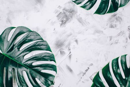 Tropical monstera pattern on textured concrete background. Top view. Close up.