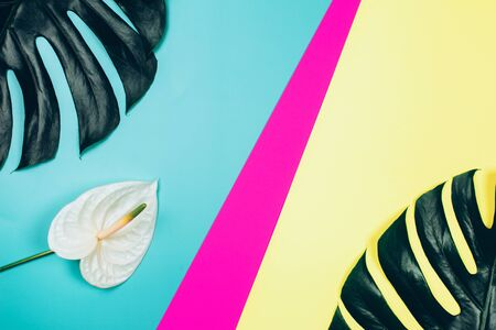 Tropical anthurium flower and monstera leaves on bright colorful background. Top view.
