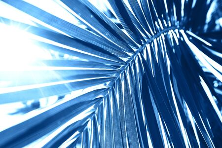 Sunlight over blue palm leaf. Tropical trendy background. Color of the year 2020 concept.