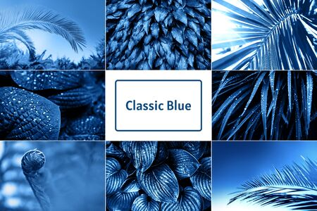 Collage with nature leaves inspired by blue color of the year 2020 Фото со стока - 135393470