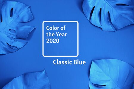 Tropical frame of blue monstera leaves. Tropical stylish concept Фото со стока