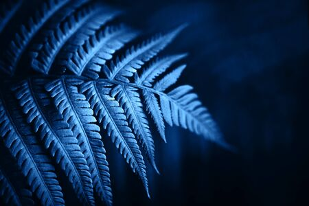 Beautiful fern leaves foliage in blue color. Perfect background for your design