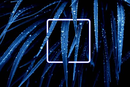 Blue leaves with rain dropsand neon frame. Color of the year 2020 concept. Фото со стока