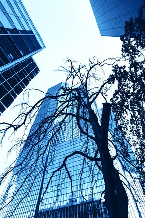 Dry tree on the background of a modern glass building Фото со стока
