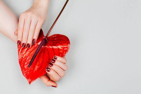 Manicure rossa con fiore - Anthurium bordo. Concetto di manicure alla moda. Stile piatto laico. Archivio Fotografico