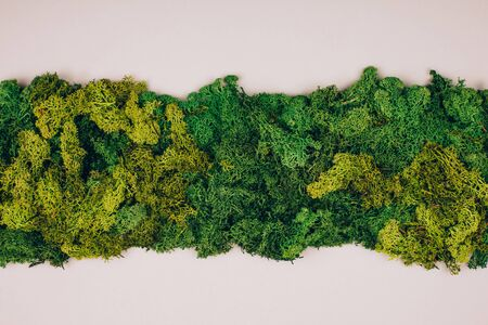 Dark green moss with copy-space on a grey background. Zero waste concept. Flat lay style.